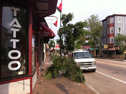 Tree damage on Atwells Avenue