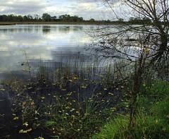 Wetlands: Autumn Lake (Tim Blessed) Tags: autumn nature reeds landscape countryside lakes wetlands ponds singlerawtonemapped