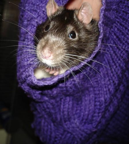 La petite souris des dents christiejane - L histoire de la souris ...