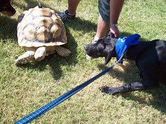 Jack and the Turtle (stargazer_910) Tags: dog jack turtle great dane gps