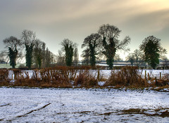 England: Northamptonshire - Snowy Day (Tim Blessed) Tags: uk trees winter sky snow nature landscapes countryside scenery singlerawtonemapped