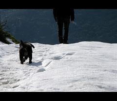 Chi mi ama, mi segua! (claudiaindy) Tags: people dog mountain cane movie walking nikon persone neve sentiero montagna passeggiata