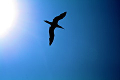 Bird shadow! In the Sky? (Neymgm) Tags: light shadow sea sky naturaleza sun bird dogs nature water beauty birds animals set mexico spider fly wind feathers crab aves front explore pajaros rivers page perros animales fp animalkingdom rivieranayarit windge lightge waterge