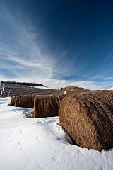 Castelluccio balinato (Flebone) Tags: inverno norcia castelluccio