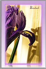 Shadows and Illusions (Brenda Boisvert .) Tags: shadow flower texture purple artistslounge fantasticflower abigfave citrit goldsealofquality flickrsfantasticflowers ilovemypics exploreflowers isris vosplusbellesphotos freedomhawk brendamb shadowsandillusions