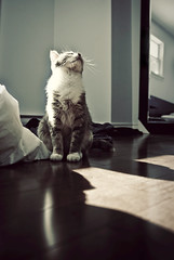 Meet Penny... (seanmcgrath) Tags: portrait pets sun slr sunshine animal cat person nikon kitten sigma style gear naturallight sunny places things noflash nb newbrunswick penny kv 1850 pennylane naturallighting 10mp sigma1850mmf28 d80 nbphoto quispamsis 1550mm sigma1850mmf28macro thebestlgihting