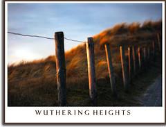 Wuthering Heights Colour (Joel Tjintjelaar) Tags: sea emily dunes north fences noordzee zee northsea poles duinen vlissingen b