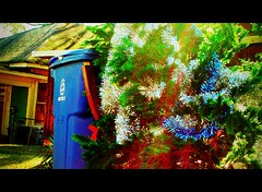 February Christmas Tree in CinemaScope