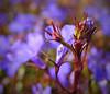 When I Grow Up (Jenn (ovaunda)) Tags: green utah purple sony violet cedarcity dsch5 pfogold pfosilver jennovaunda ovaunda