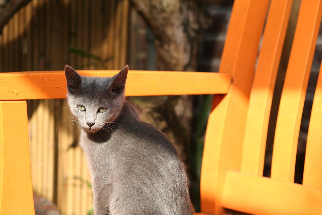 Kittens of Pegusha - Page 3 3374030346_3810b4ea8f_b