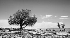 20080801-_MG_2619-Edit-2 (buddy4344) Tags: arizona landscape navajo monumentvalley navajotriballand