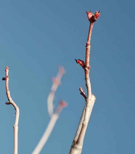 Spring DSC_6305