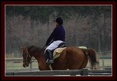 Horse Rider (cv.ajeesh) Tags: horse rider