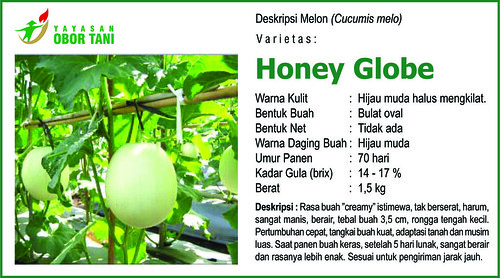 honey globe