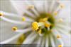 Flor-280309150338