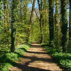 the spring wood....... (atsjebosma) Tags: flowers trees shadow holland landscape bomen nederland thenetherlands bluesky explore groningen lente zon bloemen niceweather mooiweer springwood zonnig april2009 atsjebosma schaduwwerking metklimopbegroiedebomen hetlentebos ivygrowntrees stalendblauwelucht