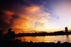 1-year Flickr Anniversary (linh.ngan) Tags: travel blue wedding sunset summer sky orange cloud storm reflection film me nature birds photoshop buildings river photography flickr serious flock dramatic peaceful scan vietnam vista 1year danang annivesary seasunclouds