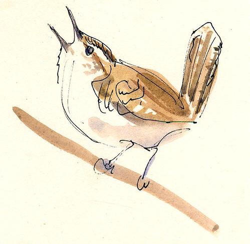 Bewick's Wren sketch