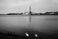 industrialization, swans (lazerfarmer) Tags: bw white black film copenhagen denmark europe swans scandinavia kbenhavn industrialization industrialisation