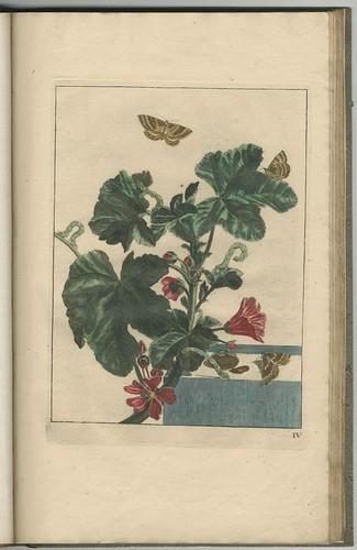 Naauwkeurige waarneemingen, 1740 i