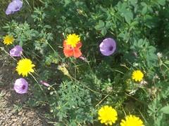 floretes