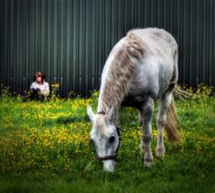 Croft (Caza_No_7) Tags: horse girl field grass warrington cheshire croft buttercups iancarroll