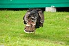 same turkey (jasonlouphotography) Tags: cameronhighlands sgpalas