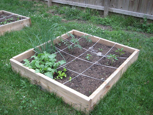 raised bed (by lauraloops)