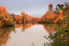 Long Tom Blaze (HeathMcConnell) Tags: tree river landscape outdoors photography gallery 1x15