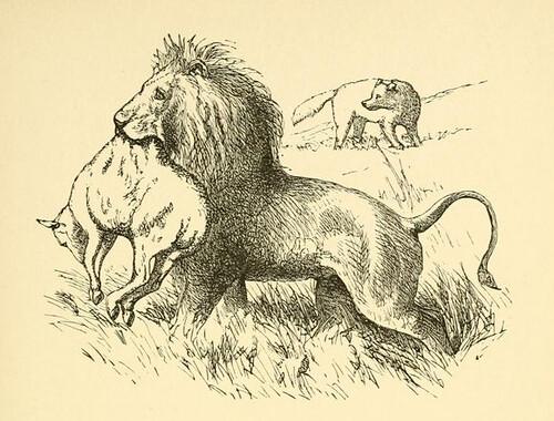 Leo et Lupus et Ovis Eius