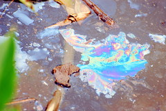 Pollution (Steve Snodgrass) Tags: park water ecology up gardens dc washington surface clean pollution oil environment aquatic float kenilworth petroleum