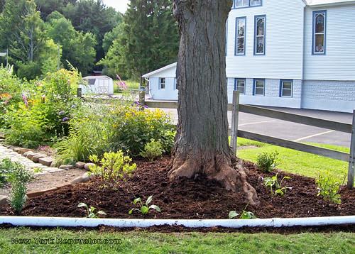 New Garden Bed 2