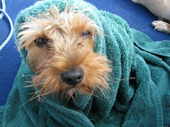 Ollie in a Towel on the Boat by Hendricks Photos, on Flickr