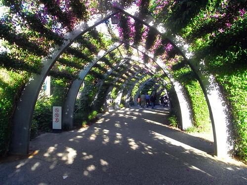 Arbour walk at South Bank