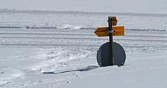 still (a lot more than) knee-deep in snow (upsa-daisy) Tags: