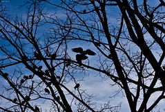 Una FrEdDa gIoRnaTa dInvErnO (Jody Art) Tags: winter sky italy tree alberi canon torino italia d uccelli cielo jody inverno turin 2009 freddo rami brrrrr corvi 40d rabbrividiamo jodyart jodysticca