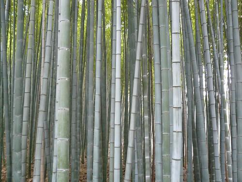 Japon 2009 #4 : Kyoto #2