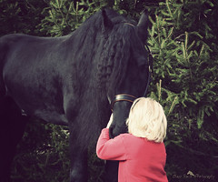 Friesian stallion Keegan J and Addy (larissa_allen) Tags: horses black love keegan equine friesian friesianhorse friesianstallion platinumheartaward friesianstallionkeegan stallionchildren