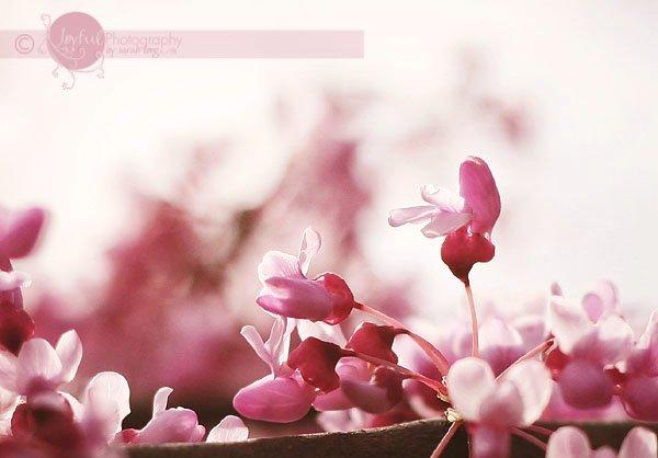 HBW! {spring}