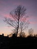 Sunset over Poole (crwilliams) Tags: sunset favorite tree silhouette skyline dorset poole date:month=march date:day=20 date:year=2009 date:wday=friday date:hour=18