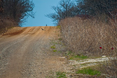 Roadrunner! (Pontotoc, Oklahoma, United States) Photo