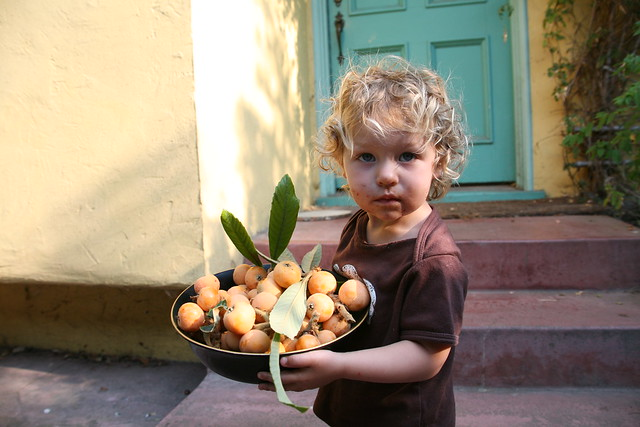 Lila with her bowl of loquats (very proud)