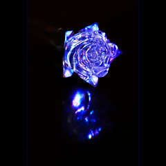 Blue Rose from Beauty and The Beast (JannaPham) Tags: blue flower macro reflection beauty rose closeup canon happy eos musical beast monday beautyandthebeast  hbm project365 40d 65365 jannapham