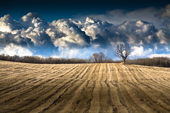 Cloud Mountains (Loren Zemlicka) Tags: trees light shadow sky mountains tree nature field lines wisconsin clouds canon landscape photography march photo vanishingpoint spring oak midwest view farm bare branches horizon picture 100mm rows short cumulus 5d agriculture distance wi 2009 distant vast expanse fitchburg canoneos5d flickrexplore danecounty canonef100mmf28macrousm ruralcountry portalwisconsinorgselected lorenzemlicka portalwisconsinorg040209