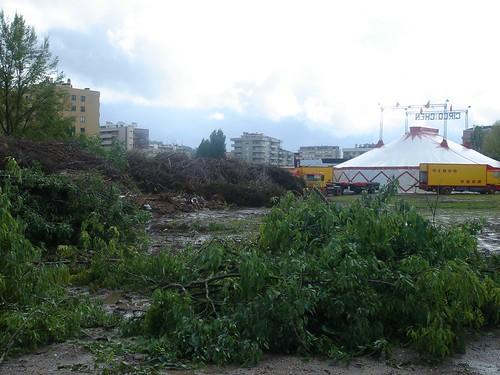 """cemitério de """"poda"""" de árvores, por: carla sousa"""