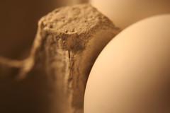41:365: Egg