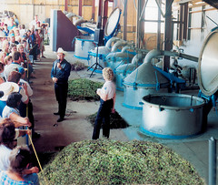 Young Living Distillery