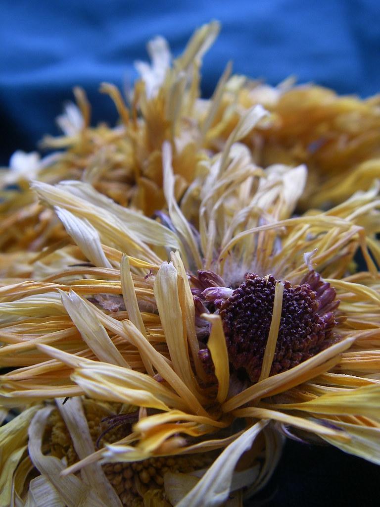 Organic Calendula (Marigold) flowers from MisticalAcScents.etsy.com