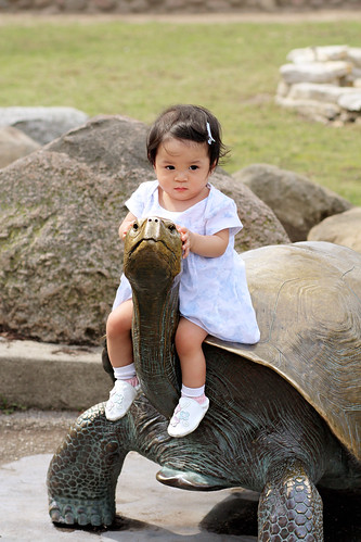 little girl, big tortoise