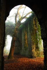 Creepy gothic church ruin (Marmaduke.) Tags: old mist tree church leaves stone rural arch gothic ruin ivy eerie east reclaimed burnley somerton